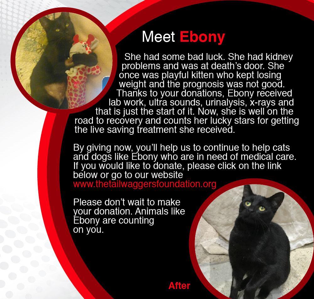 Ebony_1-01