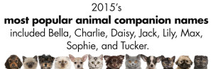 2015's most popular animal companion names included Bella, Charlie, Daisy, Jack, Lily, Max, Sophie, and Tucker.
